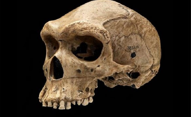 Scientists Discover New Fossils Claimed to be the Oldest Human Ancestors